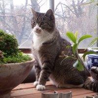 1 марта - день кошек. это котэ Ботанического сада СПб) :: Евгения Чередниченко
