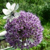 Бабочки :: Наталья Березко