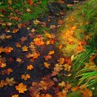 осень...осень ну давай у листьев спросим... :: Ольга Cоломатина