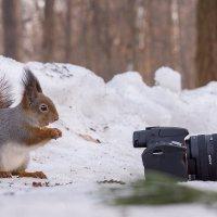 Мастер-класс от белки фотографа!!! :: Alex Bush