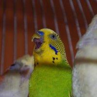 Очень счастливый попугай :: Ольга Осовская