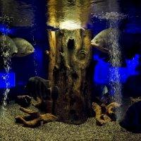 подводный мир :: Владимир Гараган
