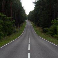 Дорога в даль :: Роман Рыжиков