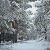 Первый снегопад :: Валерий Лазарев