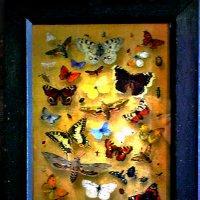 Бабочки :: Nikolay Monahov
