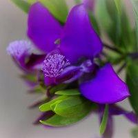 Весна идет :: Светлана marokkanka