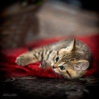 Тигр устал :: Sergey Tyulev