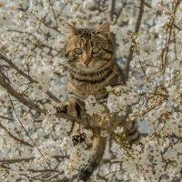 Весеннее настроение или мартовский кот :: Александр Пушкарёв