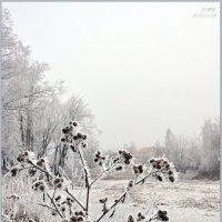 ИНЕЙ. :: Юрий Ефимов