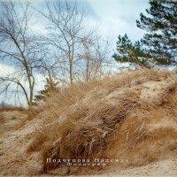 Весна :: Надежда Подчупова