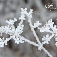 Узоры зимы :: Андрей Тер-Саркисов