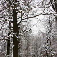 черно-белая зима :: Анна -