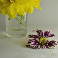 Цветы :: Мария