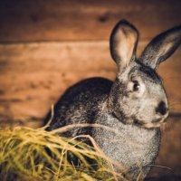 Кролик! :: Inna Sherstobitova