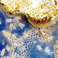 Здесь делают мёд :: Владимир Болдырев