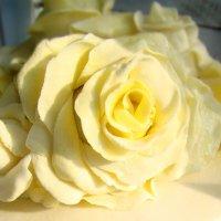 Роза из мастики на торте :: Наталья Майорова