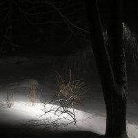 Снежный вечер первого марта :: anna borisova
