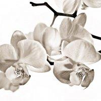 Белое на белом :: galidob