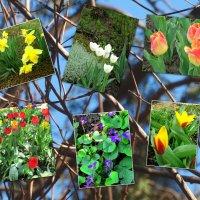 Идёт весна... :: Тамара (st.tamara)
