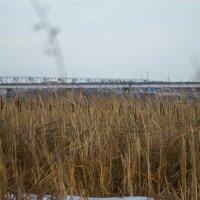 Зима, камыш, дорога, мост :: sorovey Sol