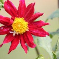 цветы :: maikl falkon