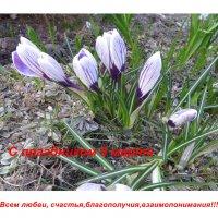 С праздником 8 марта!!! :: Ирина Олехнович