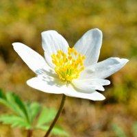 Весна неизбежна...) :: Андрей Вестмит