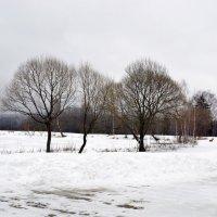 Последний день зимы. :: Елена Дёмина