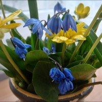 Первоцвет в подарок :: Нина Корешкова