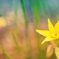 Желтая весна :: Алексей Дмитриев