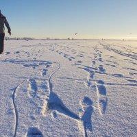 Следы на снегу. :: Ирина Нафаня