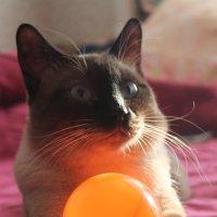 Мой кот Гав :: NюRа;-) Ковылина