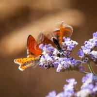 Природные формы, картины :: Gleipneir Дария
