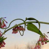 весна и каланхое :: Натали Акшинцева
