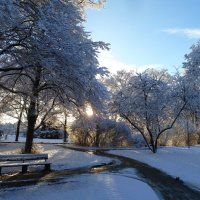 Зимнее утро в парке :: Tatjana Savelev