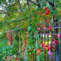 Цветущая ограда :: Милешкин Владимир Алексеевич