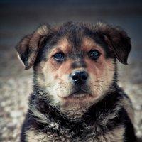 собака :: александр
