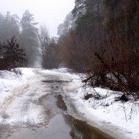 Лесные марта зеркала... :: Лесо-Вед (Баранов)
