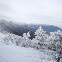 Зима на Ай-Петри :: Евгений Виноградов