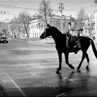 На коне! :: Владимир Шошин