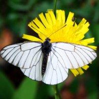 Бабочка и жучок :: Damir Si