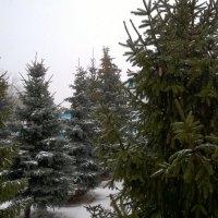 Зима в Задонске. :: Юрий Мошкин