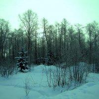 Зимнее утро :: alek48s