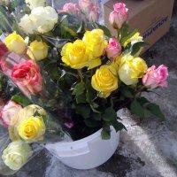 розы на улице... :: Галина Филоросс