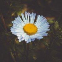 flower :: Vladislava Ozerova