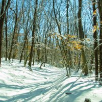 В зимнем лесу :: Иван Начинка