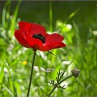 Весенние цветы Израиля :: Lmark