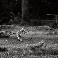 Бежать...! :: Андрей Качин