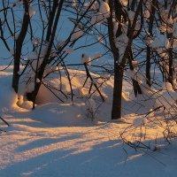 Про зимний свет. :: mike95