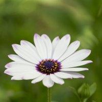 Цветок :: Александр Деревяшкин